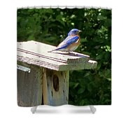 Bluebirds Make Me Happy Shower Curtain