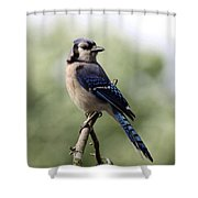 Bluejay - Bird Shower Curtain