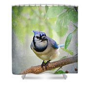 Bluejay In A Tree Shower Curtain