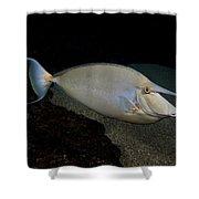 Bluespine Unicornfish Shower Curtain