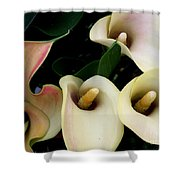 Blushing Calla Lilies Shower Curtain