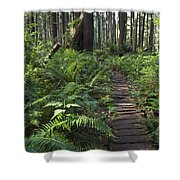 Boardwalk Winds Through The Forest Shower Curtain