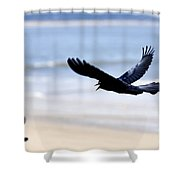 Boat-tailed Grackle - D006732 Shower Curtain