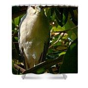Blackcrowned Night Heron Shower Curtain
