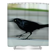Boattail In The Fast Lane Shower Curtain