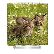 Bobcat Kittens Shower Curtain