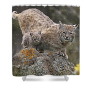 Bobcat Mother And Kitten In Snowfall Shower Curtain by Tim Fitzharris