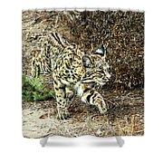 Bobcat Stalking Prey Shower Curtain
