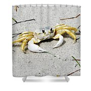 Boca Grande Crab Shower Curtain