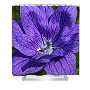Bodacious Balloon Flower Shower Curtain
