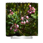 Bog-rosemary Shower Curtain