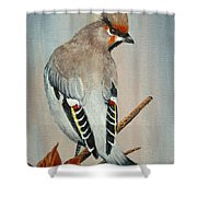 Bohemian Waxwing Study  Shower Curtain