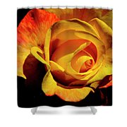 Bold Rose 2 Shower Curtain
