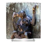 Bonobo 1 Shower Curtain