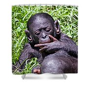 Bonobo 2 Shower Curtain