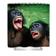 Bonobo Pan Paniscus Juvenile Pair Shower Curtain
