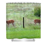 Bookend Twin Bucks Shower Curtain