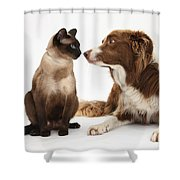 Border Collie & Siamese Cat Shower Curtain