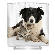 Border Collie And Kitten Shower Curtain