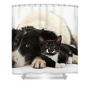 Border Collie And Tuxedo Kitten Shower Curtain