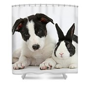 Border Collie Pup And Dutch Rabbit Shower Curtain