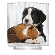 Border Collie Pup And Tricolor Guinea Shower Curtain