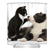 Border Collie Pup And Tuxedo Kitten Shower Curtain