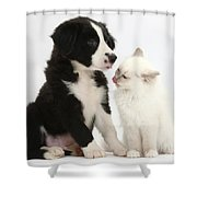 Border Collie Pup And White Kitten Shower Curtain