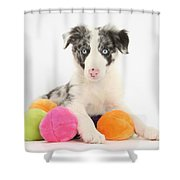 Border Collie Pup Shower Curtain