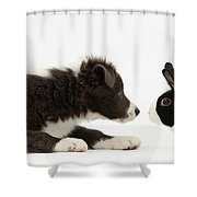 Border Collie Puppy And Rabbit Shower Curtain