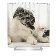 Border Collie Puppy With Rough-haired Shower Curtain