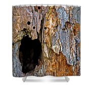 Bored By Woodpeckers Feeding Shower Curtain