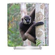 Bornean White-bearded Gibbon Shower Curtain