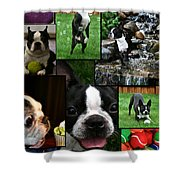 Boston Terrier Photo Collage Shower Curtain