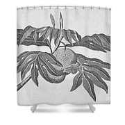 Botany: Breadfruit Tree Shower Curtain