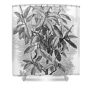 Botany: Ficus Elastica Shower Curtain