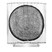 Botany:  Fir Tree Trunk Shower Curtain