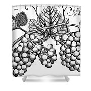 Botany: Grapes Shower Curtain by Granger