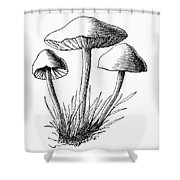 Botany: Mushroom Shower Curtain