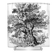 Botany: Oak Tree Shower Curtain