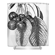 Botany: The Cherry Shower Curtain