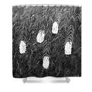 Bottlebrush Plant B W Shower Curtain