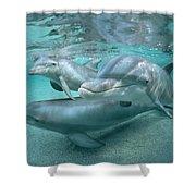 Bottlenose Dolphin Underwater Trio Shower Curtain