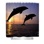Bottlenose Dolphins Shower Curtain by Francois Gohier and Photo Researchers