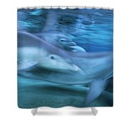 Bottlenose Dolphins Swimming Hawaii Shower Curtain