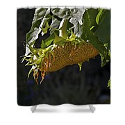 Bowed Head Shower Curtain