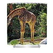 Bowing Giraffe Shower Curtain by Mariola Bitner