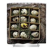 Box Of Quail Eggs Shower Curtain