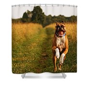 Boxer Dog Running Happily Through Field Shower Curtain by Stephanie McDowell