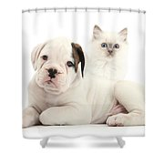 Boxer Puppy And Blue-point Kitten Shower Curtain